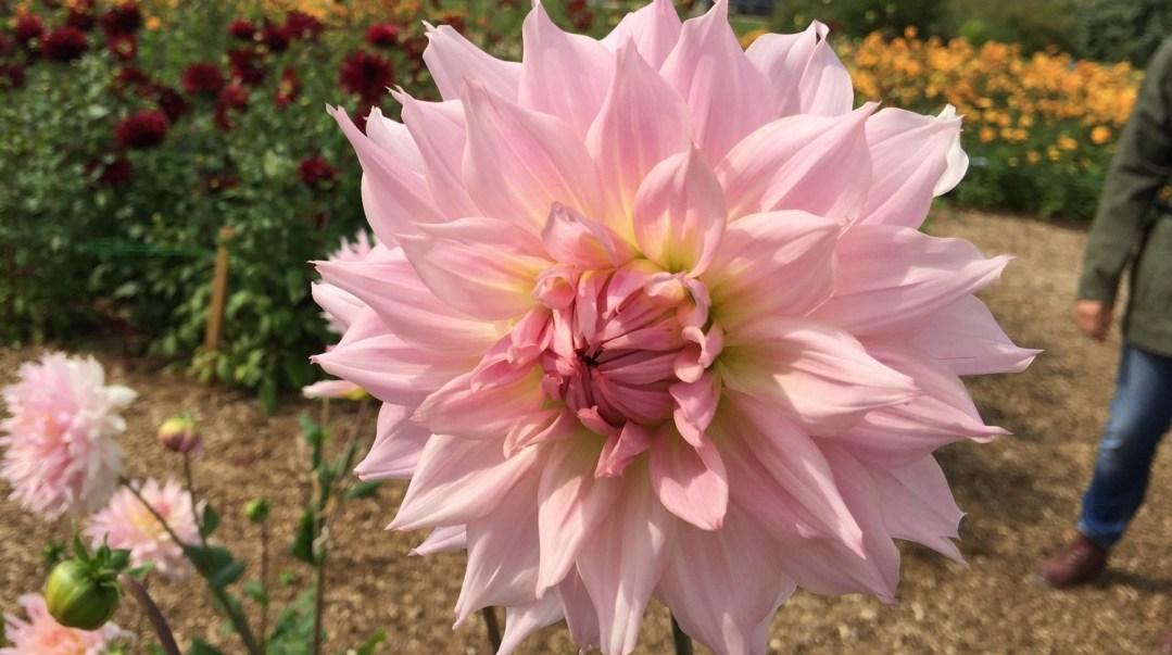 Terra Botanica 4e septembre 2017 (33)