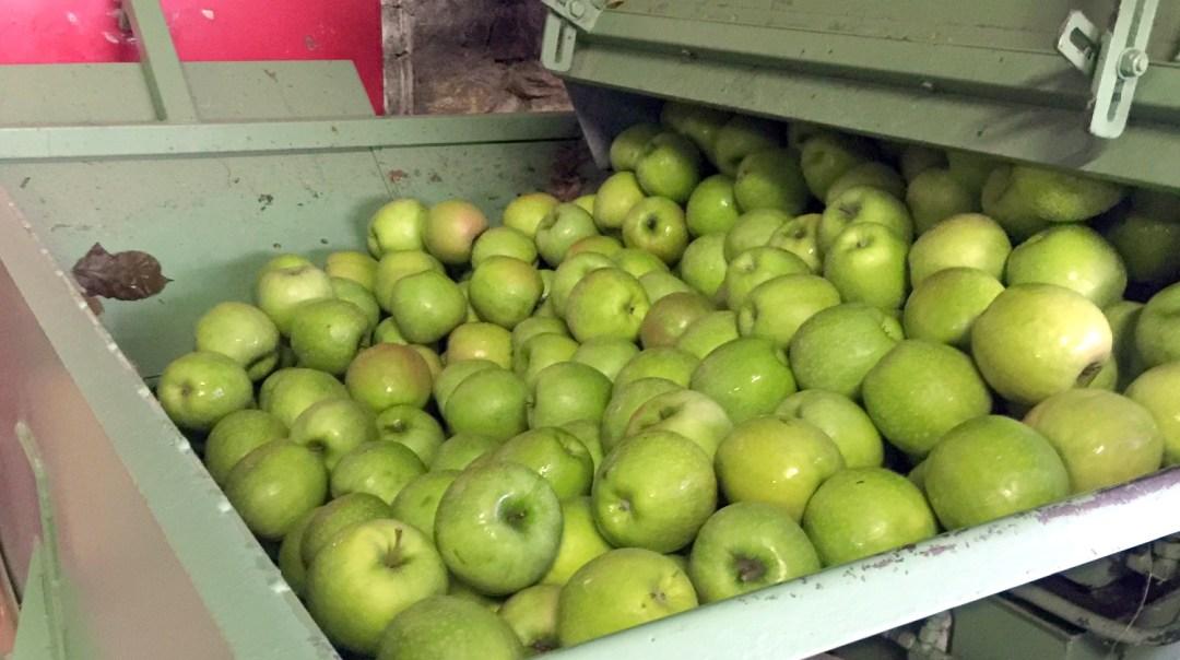 jus de pommes pour Voyage d'Etudes 201 2018 CFA MFR Puy-Sec (5)