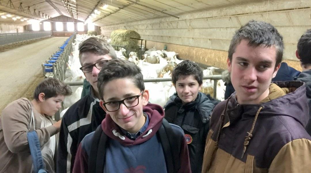 Chèvres visite GAEC Les Caprins Novembre 2017 4è (20)