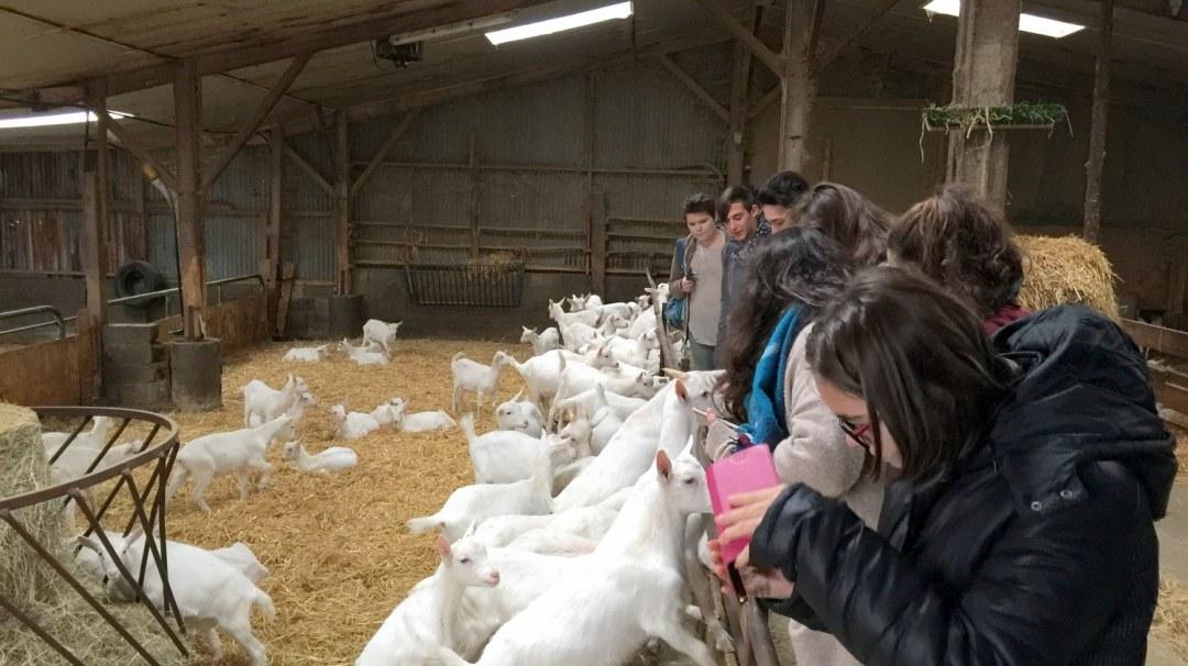 Chèvres visite GAEC Les Caprins Novembre 2017 4è (7)
