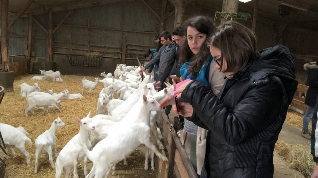 Chèvres visite GAEC Les Caprins Novembre 2017 4è (8)