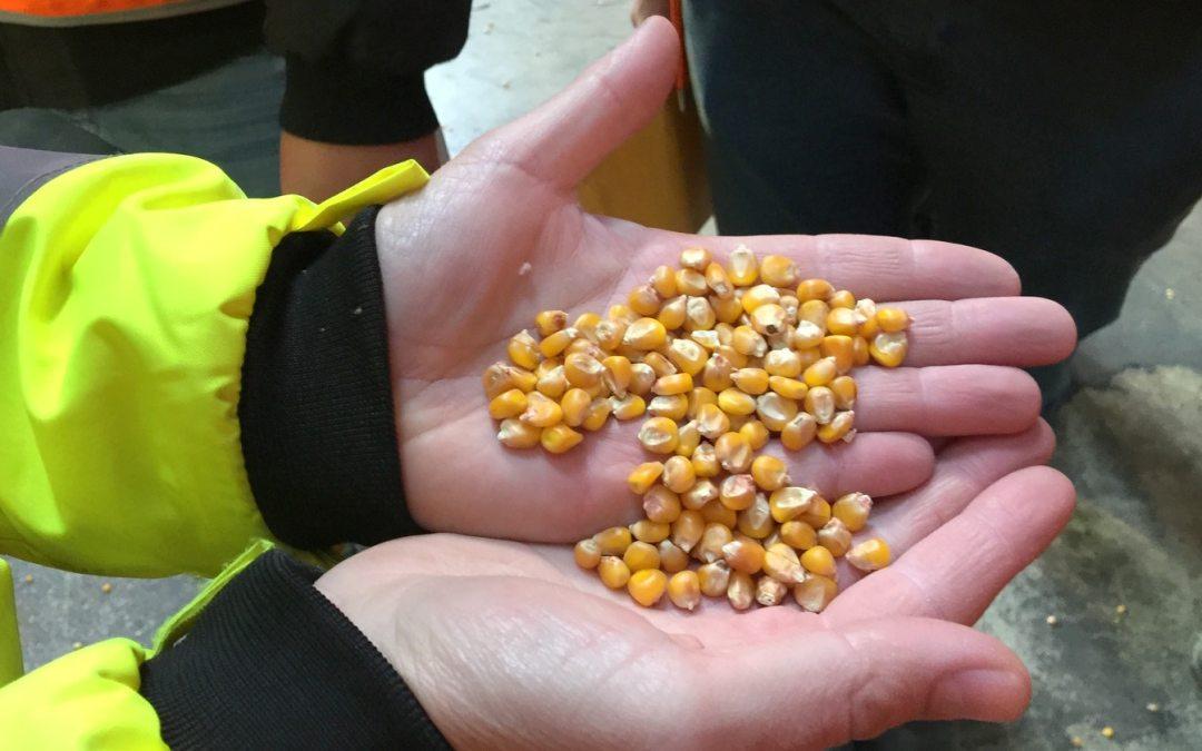 semences cavac