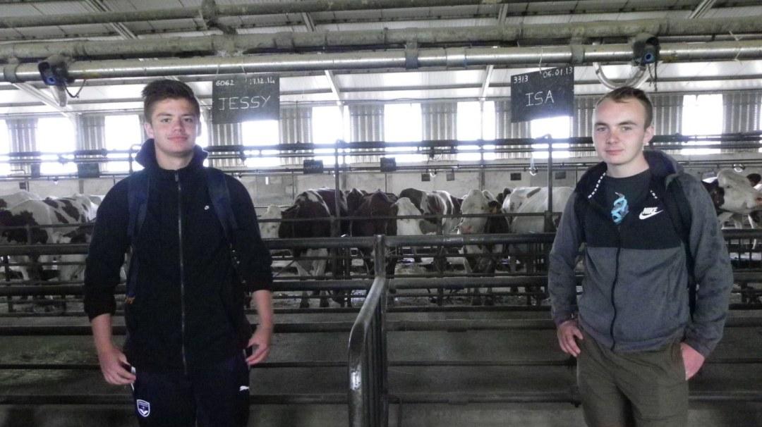 La Ferme de Bellonte Fabrication de fromage Saint-Nectaire (31)