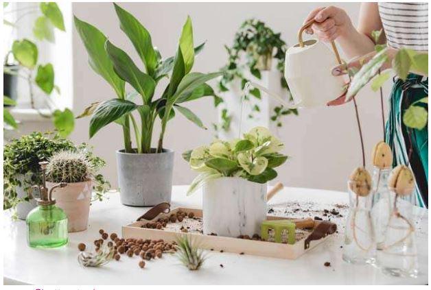 تجميل أركان منزلك باستخدام نباتات الديكور