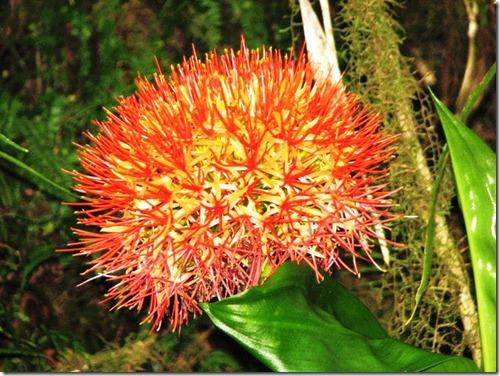 Kilimanjaro Plant Life (2)