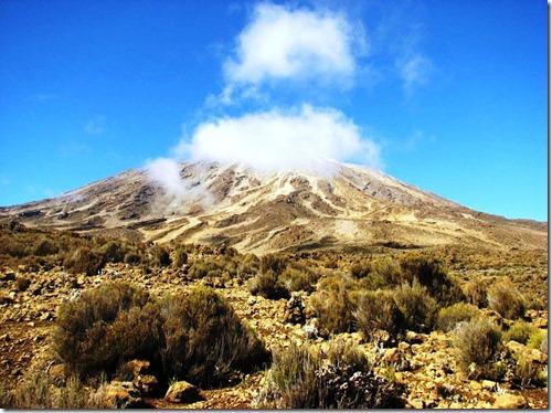 Kilimanjaro Plant Life (43)