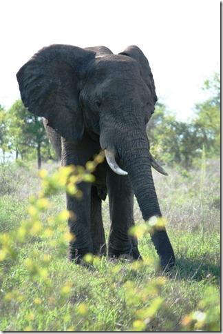 2009_11_23 South Africa Kruger (2)