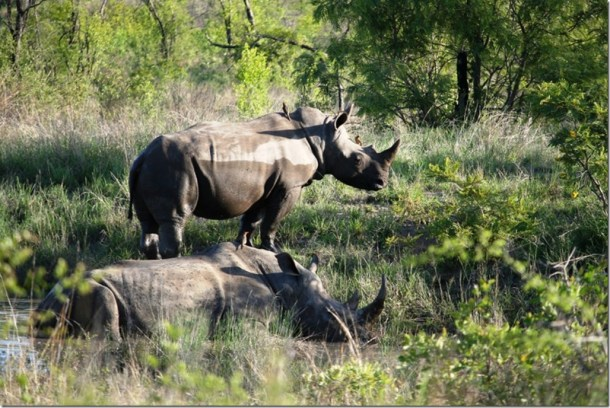 2009_11_23 South Africa Kruger (4)