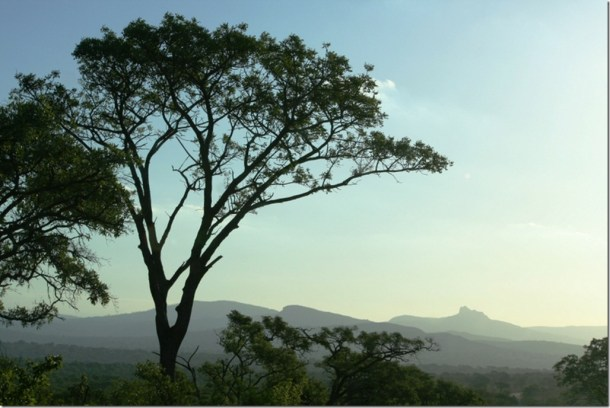2009_11_23 South Africa Kruger (5)