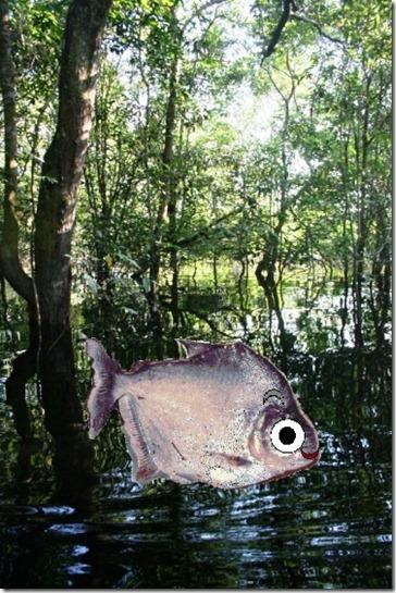2008_07_18 Brazil Piranhas (6)