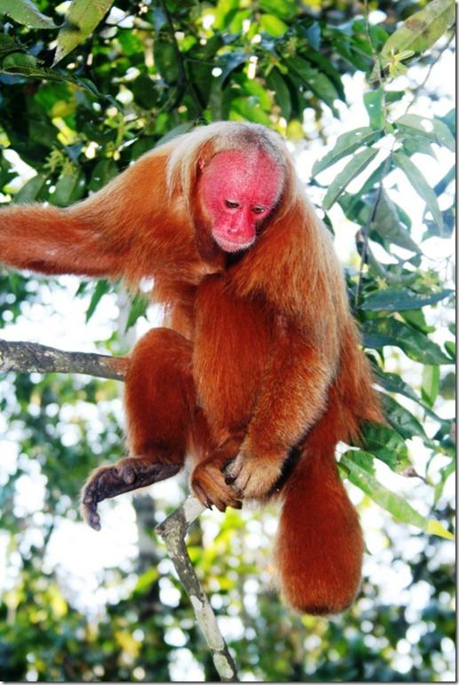 2008_07_17 Brazil Amazon Monkey Park (7)