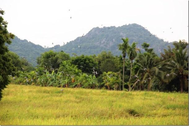2012_09_15 Thailand Hua Hin Countryside (4)