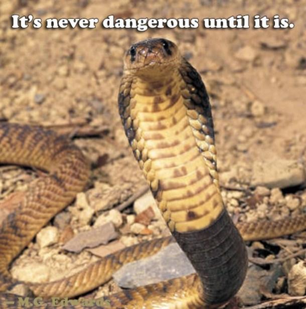 danger_thumb2