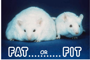 Diagnosing the mouse as Fat or Fit