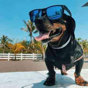 cane-occhiali-piscina-mi-ami