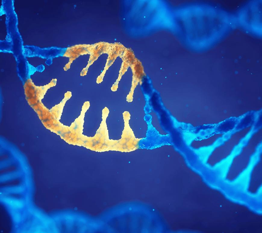 genetyka, genom, gen