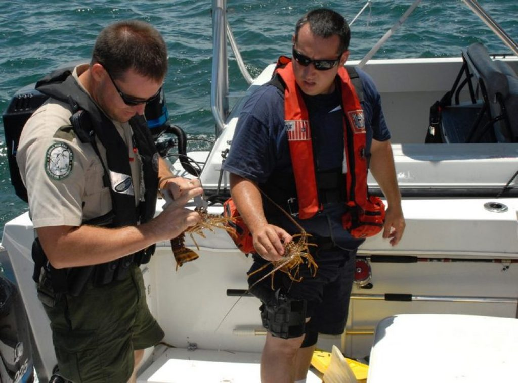 MARATHON, Fla (July 26, 2006) -- A Florida Fish and Wildlife Conservation commission officer and Coast Guard Petty Officer Third Class Victor Rosario, a boarding team member, measure the carapace of the lobsters to ensure they are of legal size. Lobster carapace must be greater than three inches. USCG photo by Petty officer 3rd Class James P. Judge
