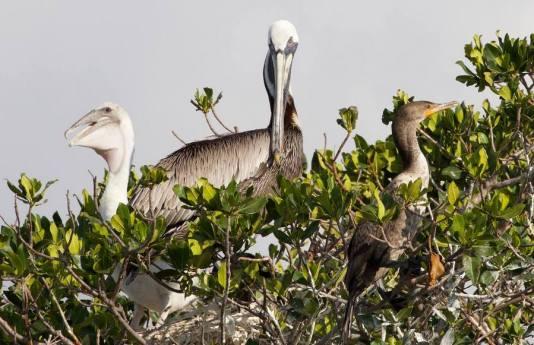 sunset cruise Miami, day cruise Miami, Pelican harbor, MiamiCurated