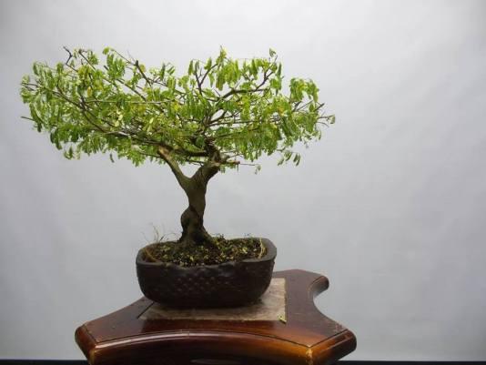 bonsai Miami, Japanese gardens Miami, July events Miami, MiamiCurated