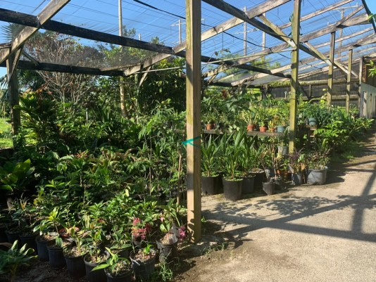 nurseries miami, nurseries davie, garden centers Miami, jesse durko's nursery, Miamicurated