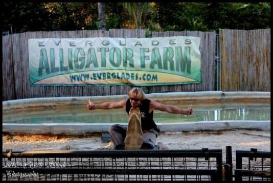 visit alligators miami, alligator farms Miami