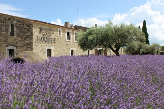 lavender museum, lavender museum provence, lavender museum in france, Miamicurated