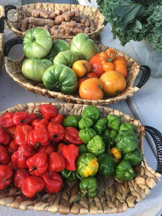 farmers markets in miami, fl. MiamiCurated