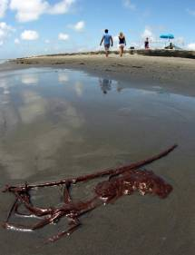Oil Pollutes Grand Isle Miami Herald