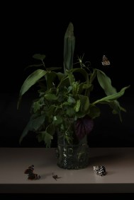 Stillife without flowers