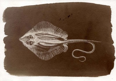 Salt print (made with North Sea water) of extinct fish (stingray)