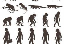 EVOLUCION MICROEVOLUCION ADAPTACIÓN MACROEVOLUCION