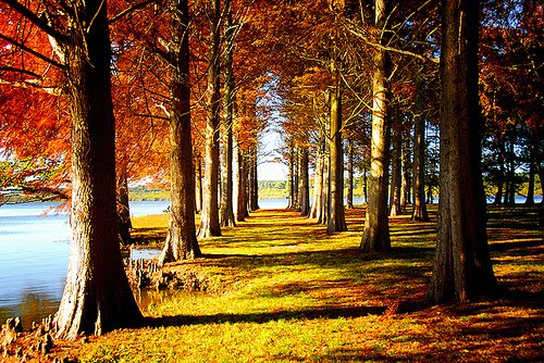 Autumn Lake, Aquitaine, France