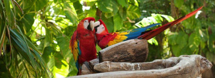 5 Lugares que tienes que conocer en la Riviera Maya