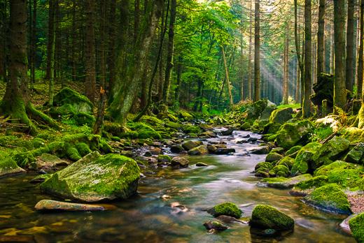 Gebirgsbach im Nordschwarzwald  Bilder vom Schwarzwald