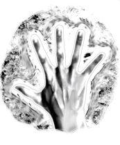 An internal illustration