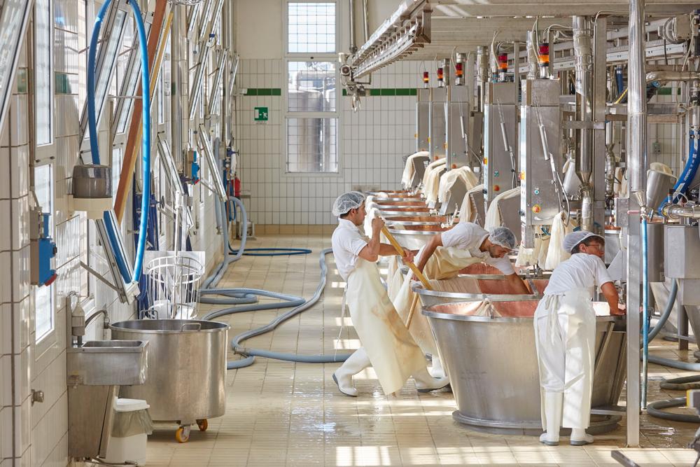 Parmesan Cheese Manufacturing