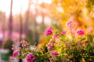How to Create Color in Your Garden Throughout the Year