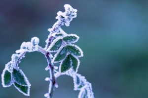 Winter Landscaping Tips for Property Managers