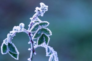 How to Keep Your Plants from Freezing