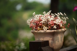 Tips for Watering Potted Plants