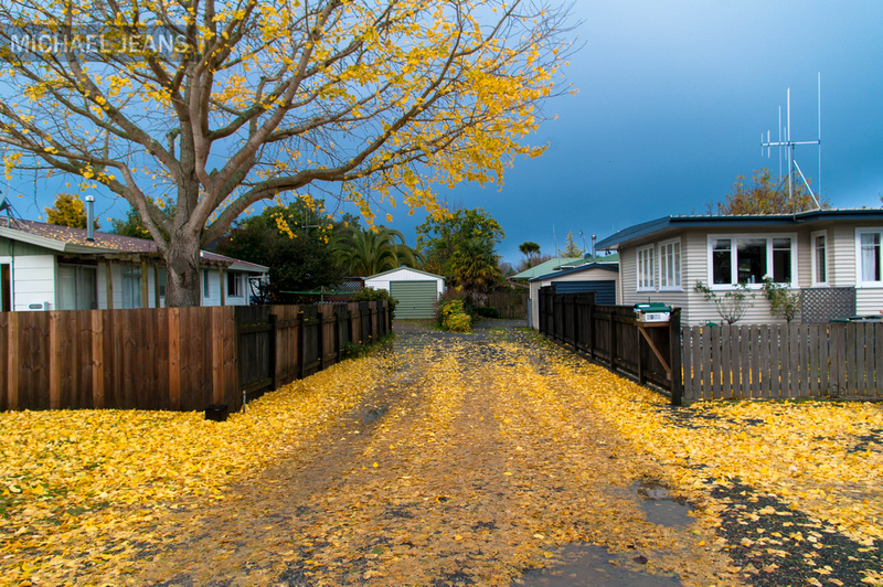 Ginkgo Shakespeare Street Leamington NZ