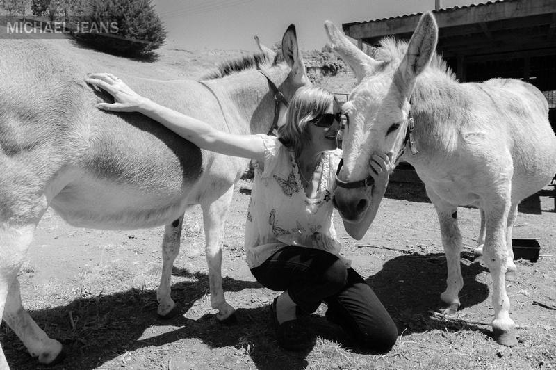 Visiting donkeys Whanganui  14:09 2/2/2013