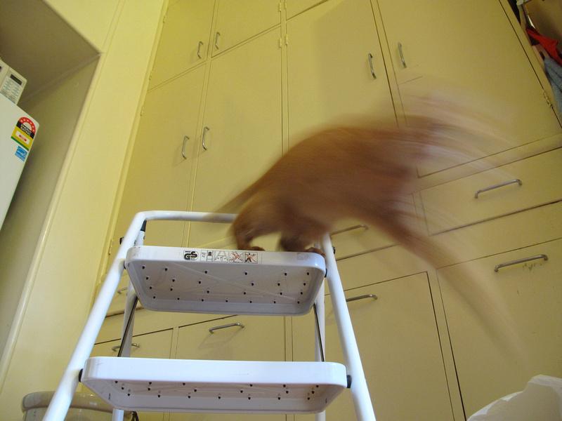 Buffy leap