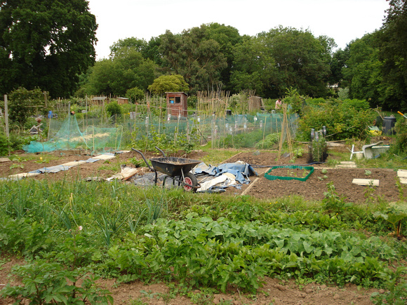 Allotments are not usually aesthetically pleasing.