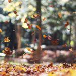 otoño covid