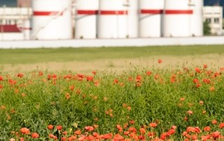 Poppy Field Fronting Oil Refinery