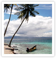 Beautiful beach with a coconut trees