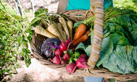 Basket of fresh fruits and vegetables