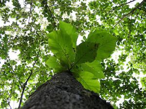 Tree in Rainforest