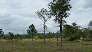Landscape in tropics
